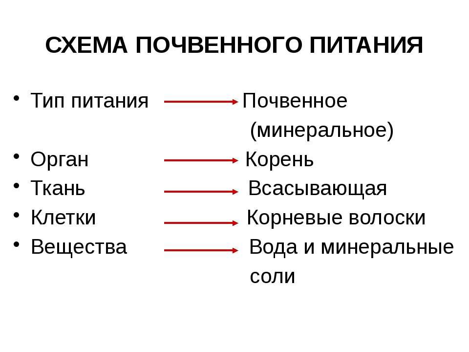 СХЕМА ПОЧВЕННОГО ПИТАНИЯ Тип питания Почвенное (минеральное) Орган Корень Тка...