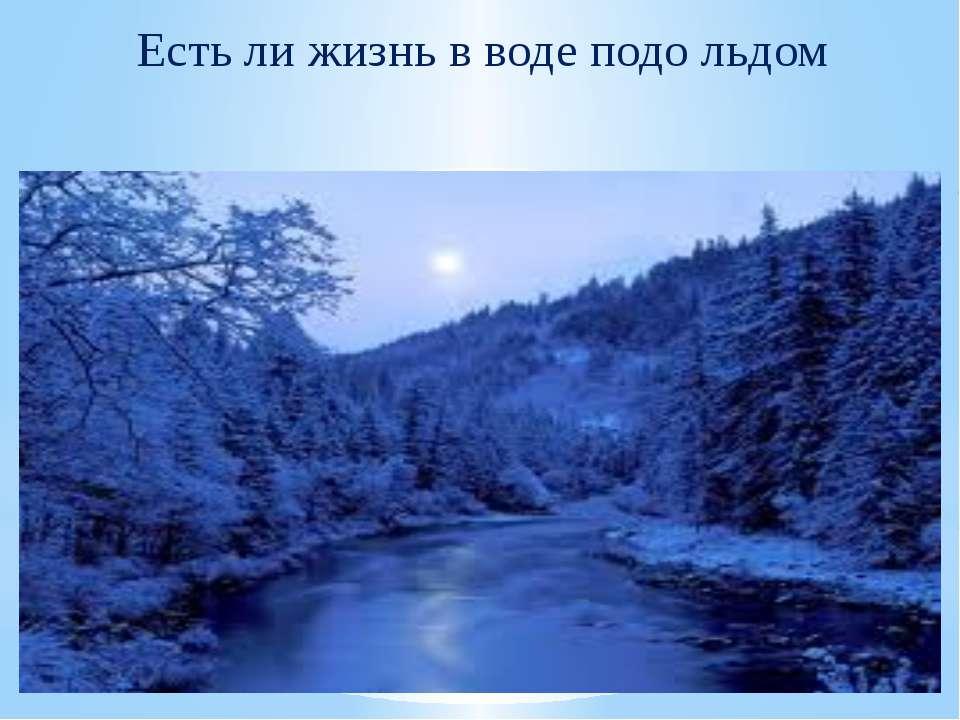 Есть ли жизнь в воде подо льдом