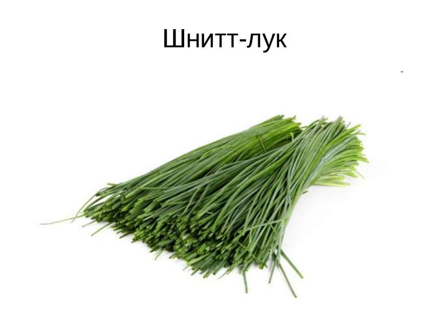 Шнитт-лук