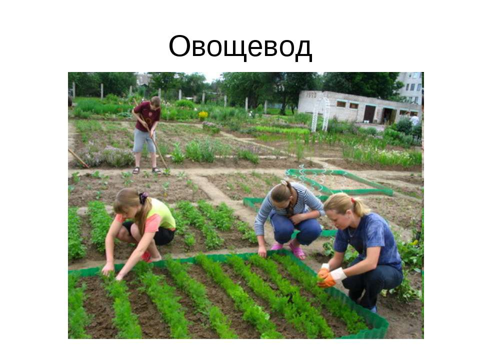 Овощевод