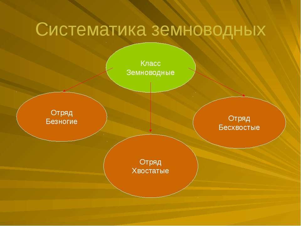 Систематика земноводных Класс Земноводные Отряд Безногие Отряд Хвостатые Отря...