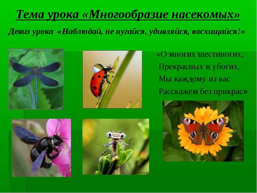 Тема урока «Многообразие насекомых» Девиз урока «Наблюдай, не пугайся, удивля...