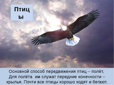 Птицы Основной способ передвижения птиц – полёт. Для полёта им служат передни...