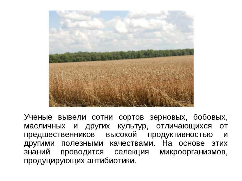 Ученые вывели сотни сортов зерновых, бобовых, масличных и других культур, отл...