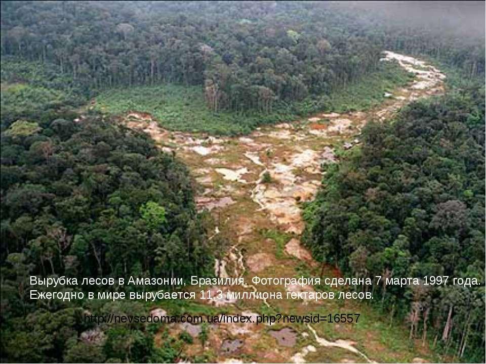 Вырубка лесов в Амазонии, Бразилия. Фотография сделана 7 марта 1997 года. Еже...