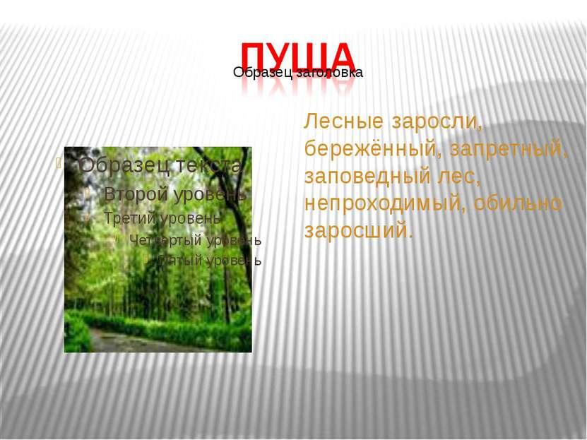 Лесные заросли, бережённый, запретный, заповедный лес, непроходимый, обильно ...