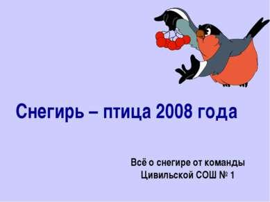 Снегирь – птица 2008 года Всё о снегире от команды Цивильской СОШ № 1