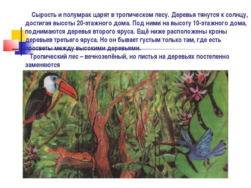 Сырость и полумрак царят в тропическом лесу. Деревья тянутся к солнцу, достиг...