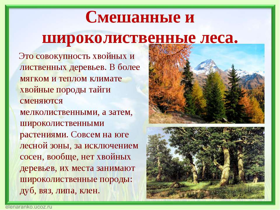Смешанные и широколиственные леса. Это совокупность хвойных и лиственных дере...