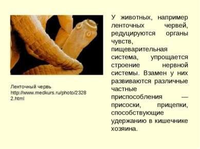 У животных, например ленточных червей, редуцируются органы чувств, пищеварите...