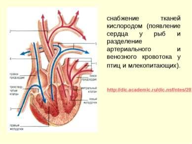 снабжение тканей кислородом (появление сердца у рыб и разделение артериальног...
