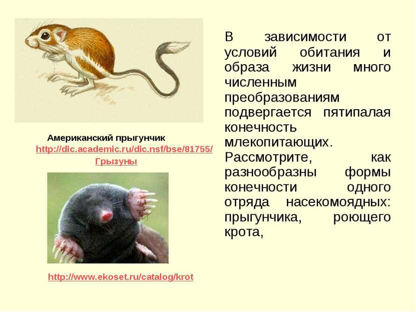 В зависимости от условий обитания и образа жизни много численным преобразован...