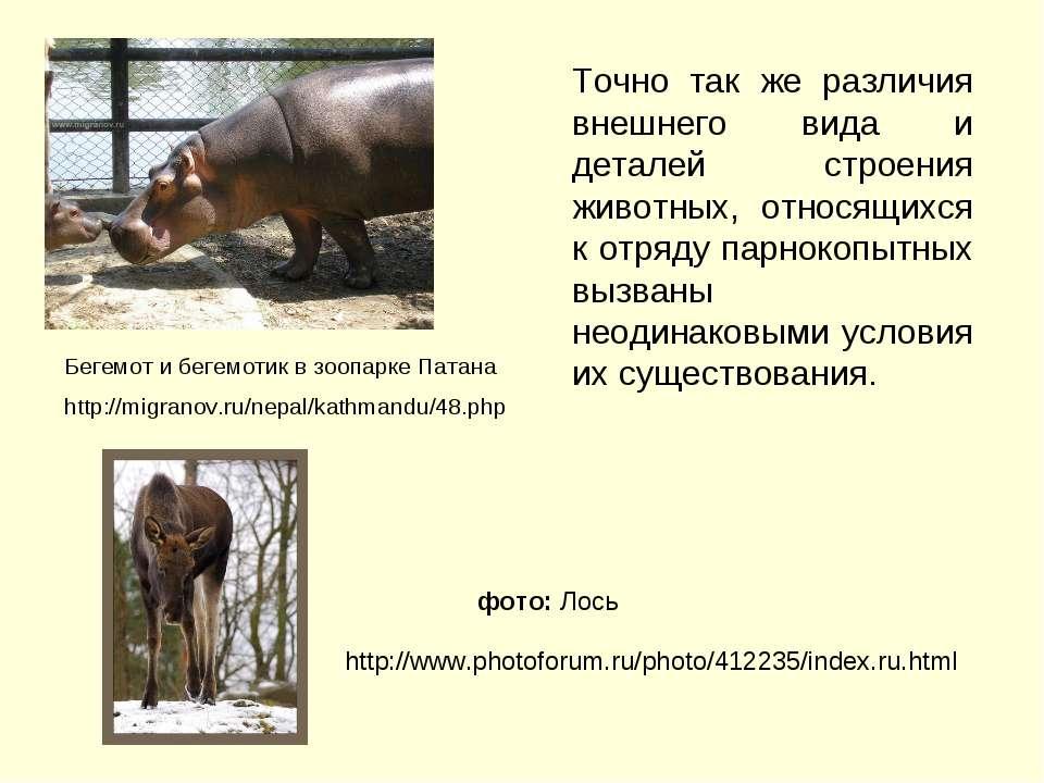 Точно так же различия внешнего вида и деталей строения животных, относящихся ...
