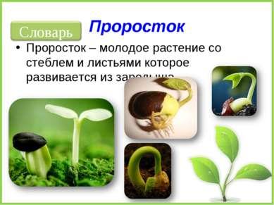 Проросток Проросток – молодое растение со стеблем и листьями которое развивае...