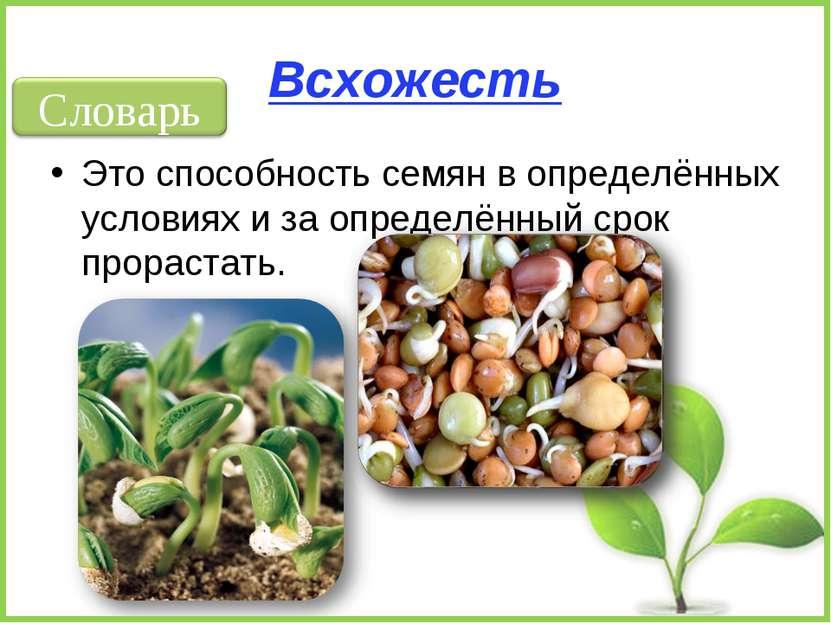 Всхожесть Это способность семян в определённых условиях и за определённый сро...