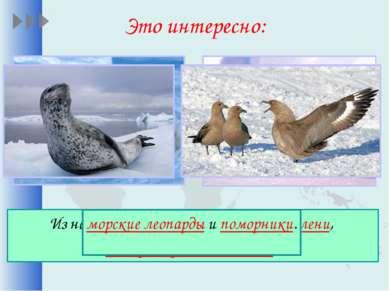 Это интересно: Из наземных животных обитают тюлени, императорские пингвины, м...