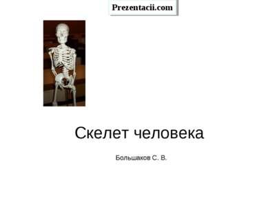 Скелет человека Большаков С. В.