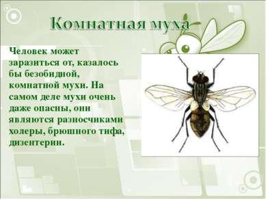 Человек может заразиться от, казалось бы безобидной, комнатной мухи. На самом...