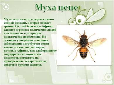 Муха цеце является переносчиком сонной болезни, которая лишает зрения. От это...