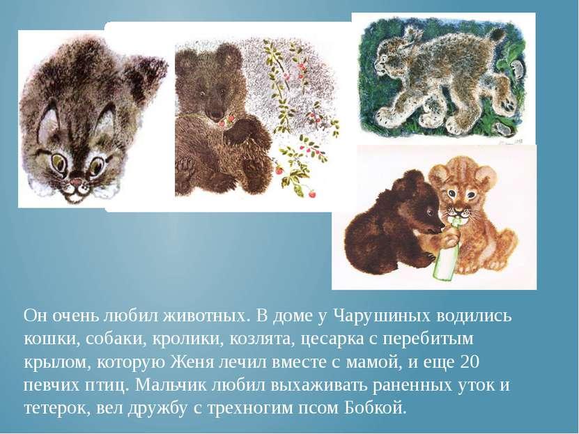 Он очень любил животных. В доме у Чарушиных водились кошки, собаки, кролики, ...