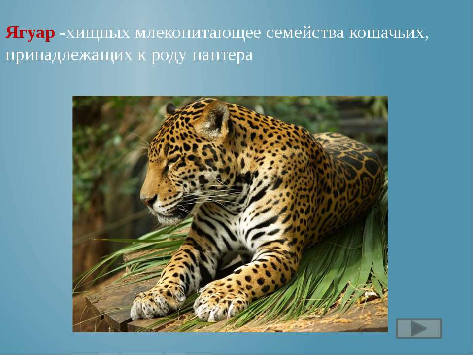 http://musafirova.ucoz.ru/Rebjata/Chitalnyj_zal/Foto/Charushin.jpg портрет Ча...