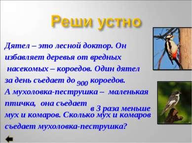 Дятел – это лесной доктор. Он избавляет деревья от вредных насекомых – короед...