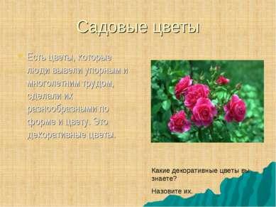 Садовые цветы Есть цветы, которые люди вывели упорным и многолетним трудом, с...