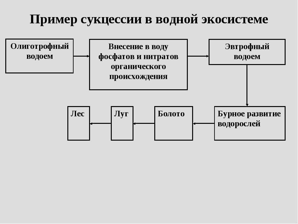 Пример сукцессии в водной экосистеме