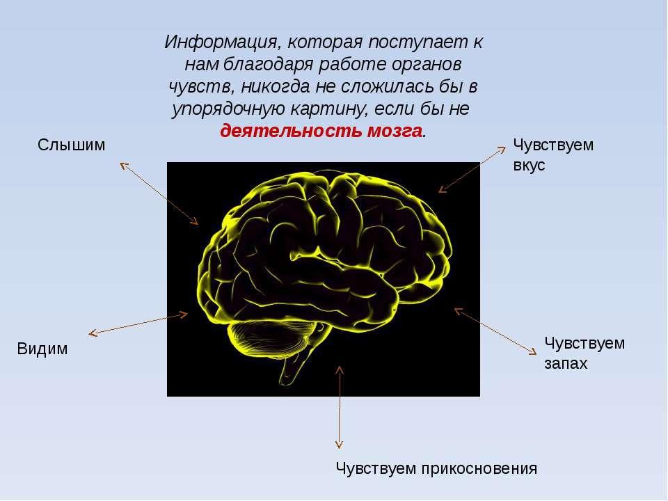 Информация, которая поступает к нам благодаря работе органов чувств, никогда ...