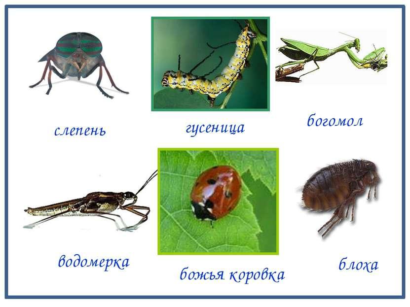 грудь крылья брюшко Строение тела насекомых бабочка голова крылья