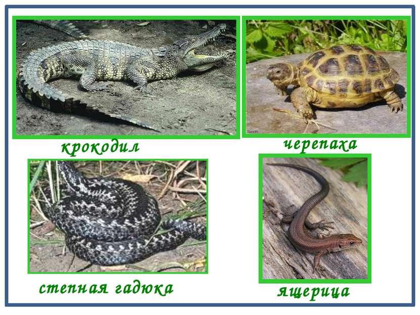 шея туловище Строение тела пресмыкающихся зелёная ящерица голова хвост ноги