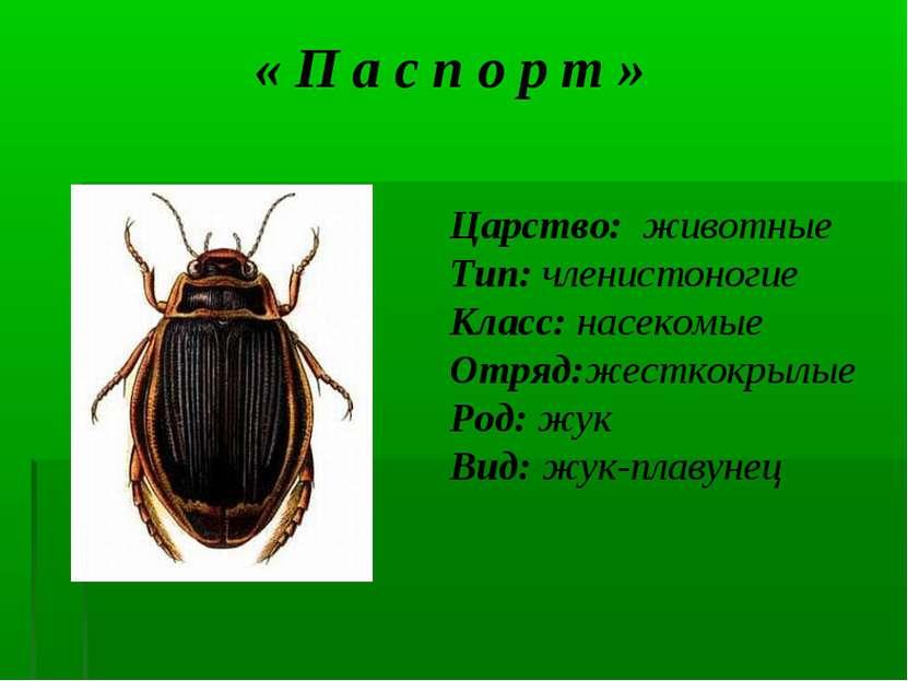 « П а с п о р т » Царство: животные Тип: членистоногие Класс: насекомые Отряд...