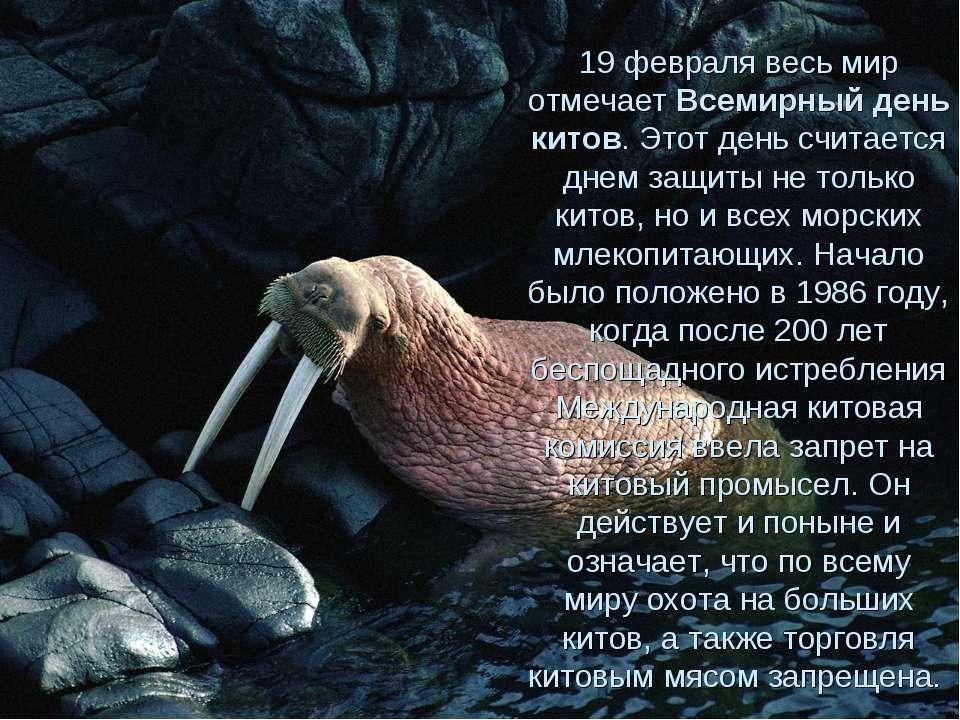 19 февраля весь мир отмечает Всемирный день китов. Этот день считается днем з...