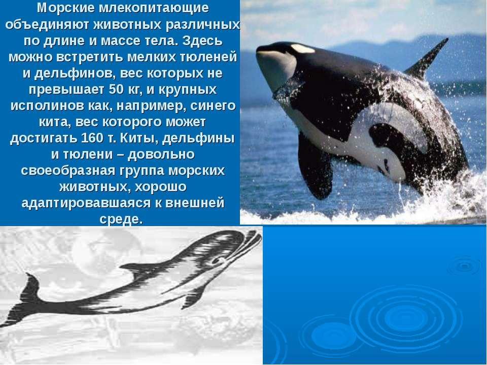 Морские млекопитающие объединяют животных различных по длине и массе тела. Зд...
