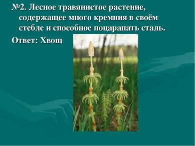 №2. Лесное травянистое растение, содержащее много кремния в своём стебле и сп...