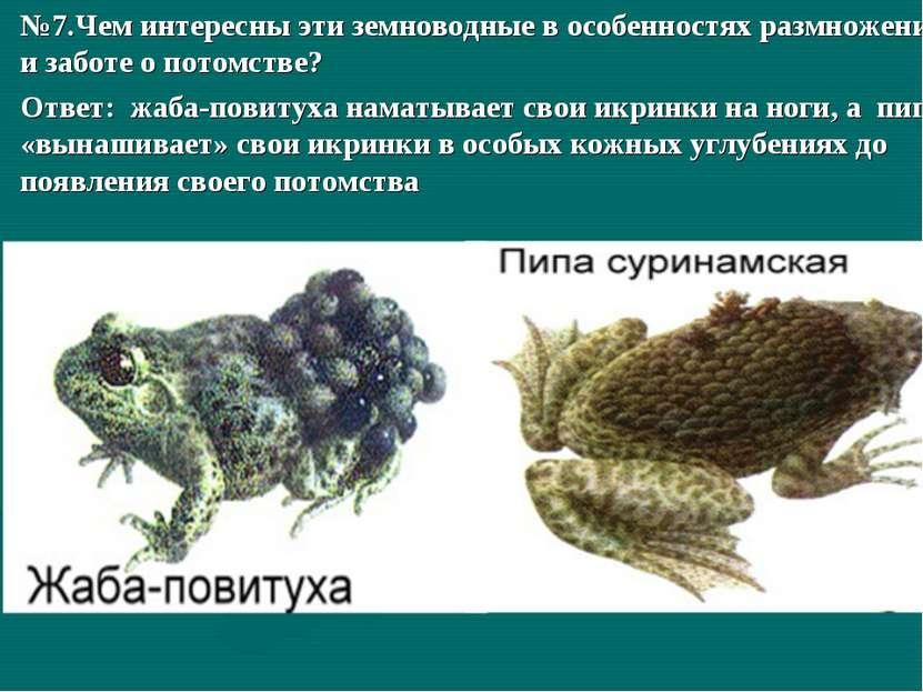 №7.Чем интересны эти земноводные в особенностях размножения и заботе о потомс...