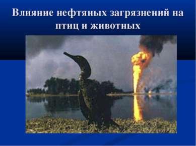 Влияние нефтяных загрязнений на птиц и животных
