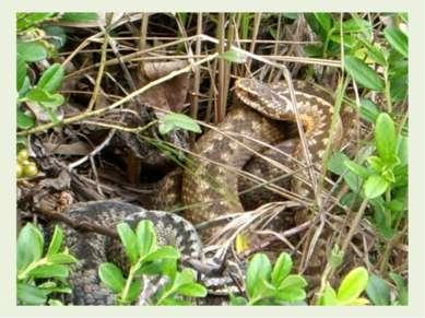 Продолжим. Змея, шурша листвой дубовой, Зашевелилася в дупле. И в лес пошла, ...