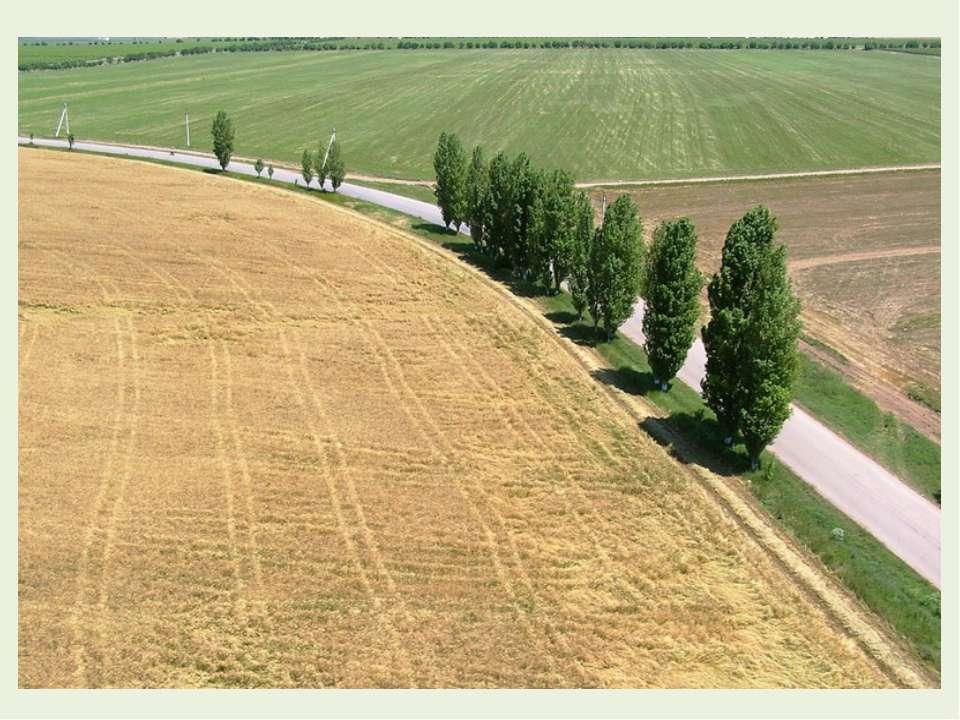 Продолжим. Опять привольные поля Проходят мимо нас кругами, И хутора и тополя...