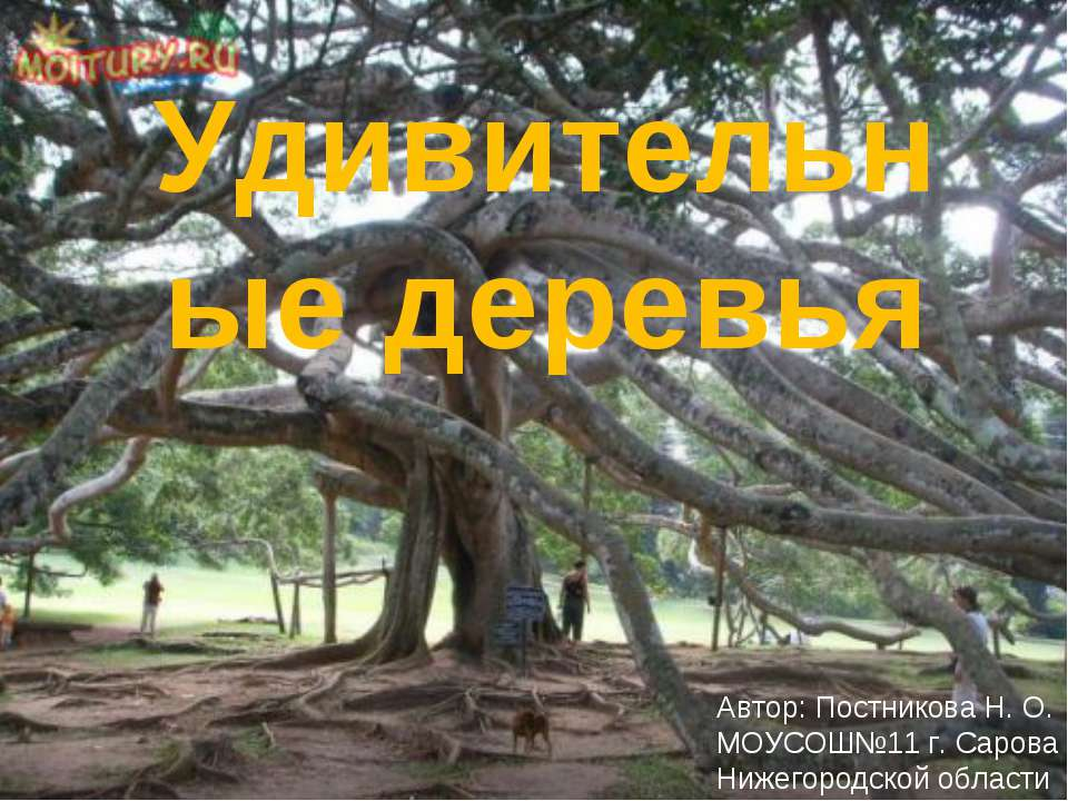 Удивительные деревья Автор: Постникова Н. О. МОУСОШ№11 г. Сарова Нижегородско...