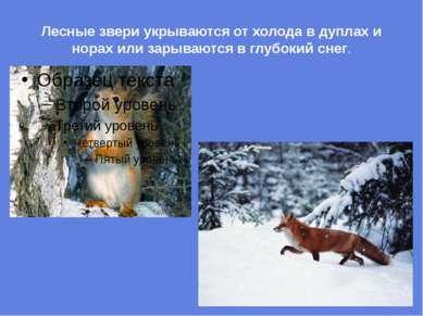 Лесные звери укрываются от холода в дуплах и норах или зарываются в глубокий ...