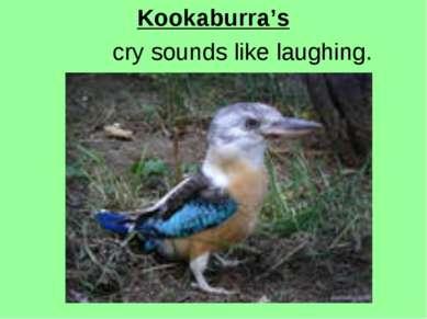 Kookaburra's cry sounds like laughing.