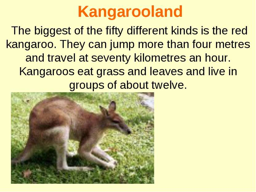 Kangarooland The biggest of the fifty different kinds is the red kangaroo. Th...