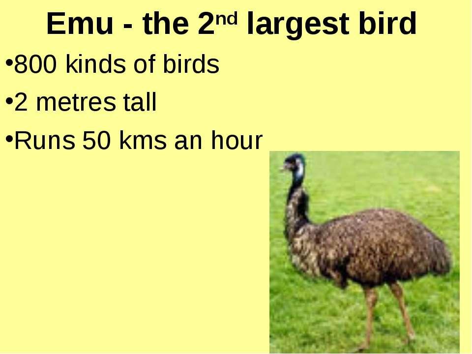 Emu - the 2nd largest bird 800 kinds of birds 2 metres tall Runs 50 kms an hour