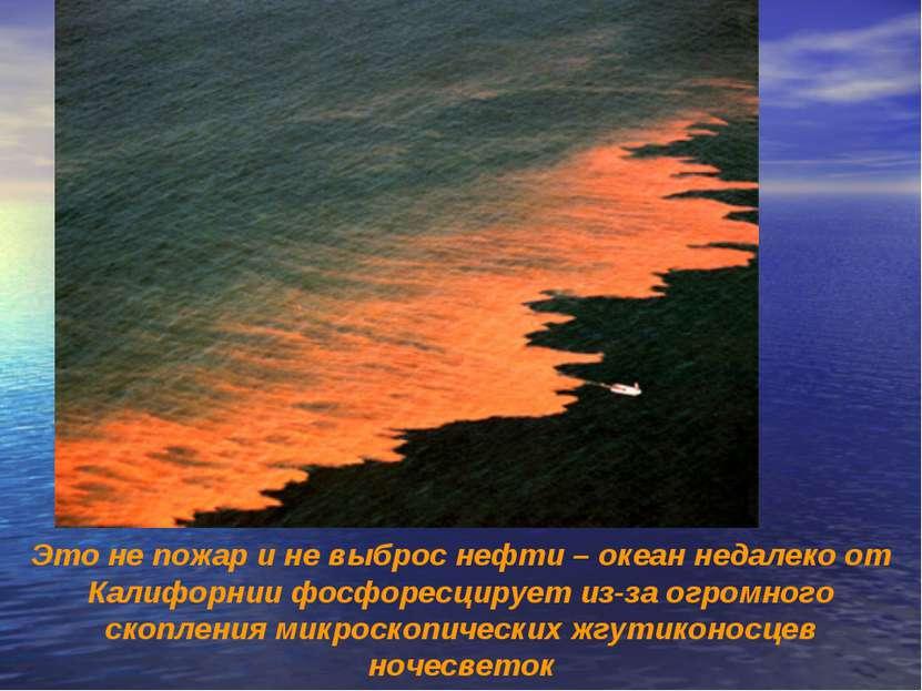 Это не пожар и не выброс нефти – океан недалеко от Калифорнии фосфоресцирует ...