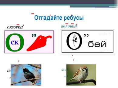 Отгадайте ребусы СКВОРЕЦ Перелётная птица ВОРОБЕЙ Зимующая птица