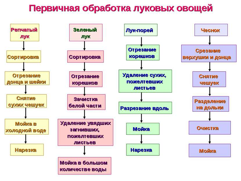 Первичная обработка луковых овощей Репчатый лук Сортировка Отрезание донца и ...