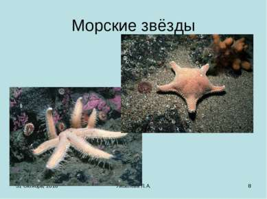 * Яковлева Л.А. * Морские звёзды Яковлева Л.А.
