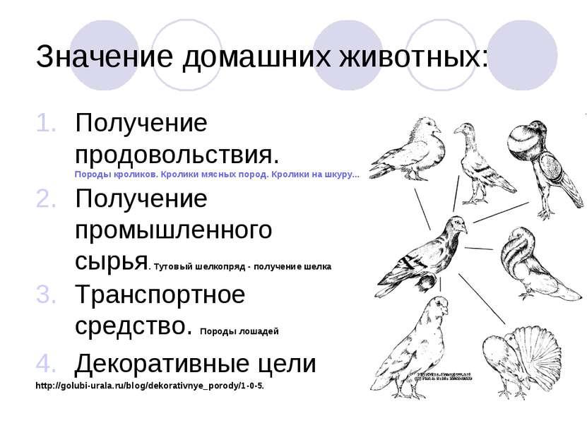 Значение домашних животных: Получение продовольствия. Породы кроликов. Кролик...