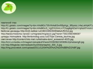 павлиний глаз http://t1.gstatic.com/images?q=tbn:ANd9GcTBVtN4s6SmRBpXgz_8l5pd...